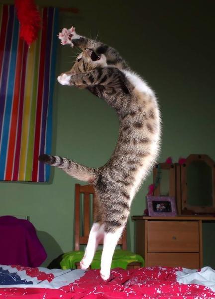 GALERIE - Nejvtipnější tancující kočky
