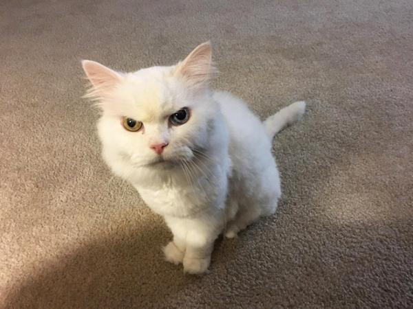 GALERIE - Kočky hodnotí vaše rozhodnutí