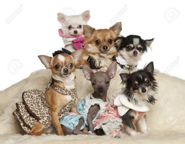 GALERIE - Nejšílenější psí oblečky