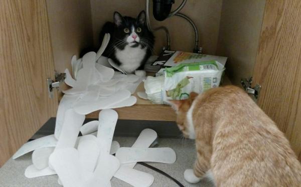 GALERIE - Naschvály vašich koček
