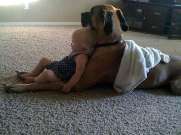 GALERIE - Nekonečná psí láska k lidem #7