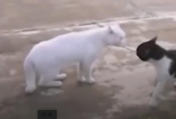 I psi a kočky rádi tancují