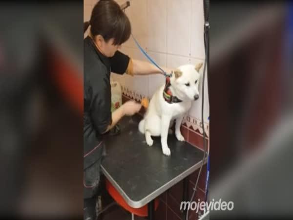 Ze života psí kadeřnice
