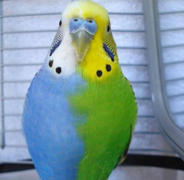 GALERIE - Úžasná zbarvení zvířat