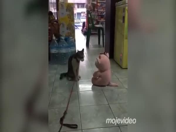 Kočka v souboji