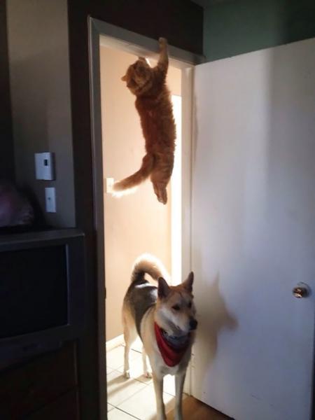 GALERIE - Kočky chyceny při činu!
