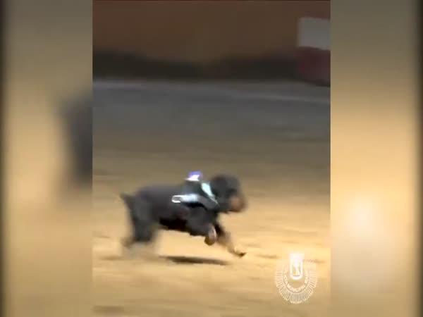 Policejní pes Pončo