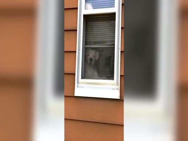 Ten pes je prostě všude