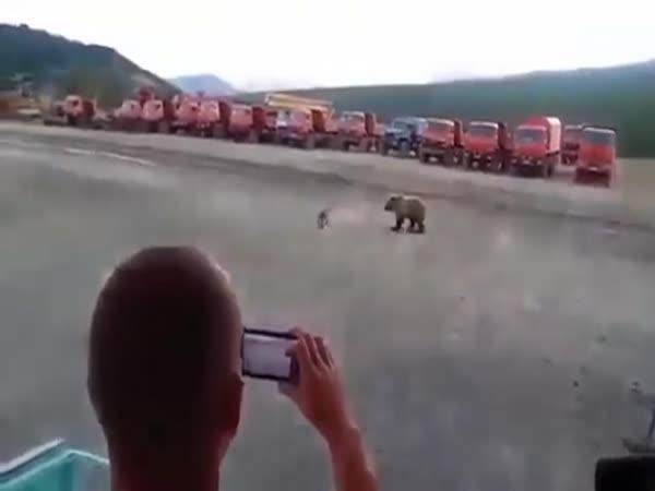 Zvědavý medvěd na výletě