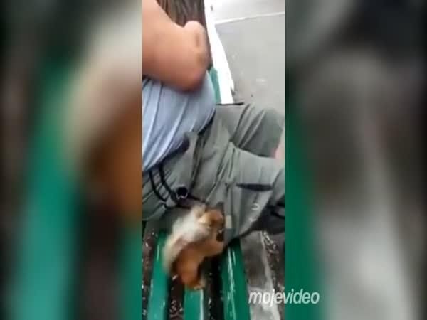 Zvířecí kapsář