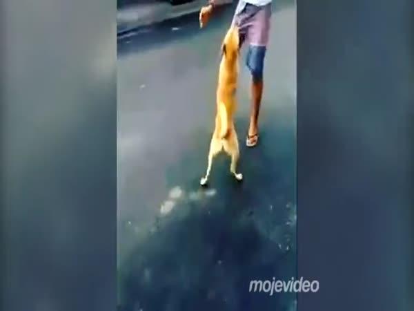 Pes vs. tanečník