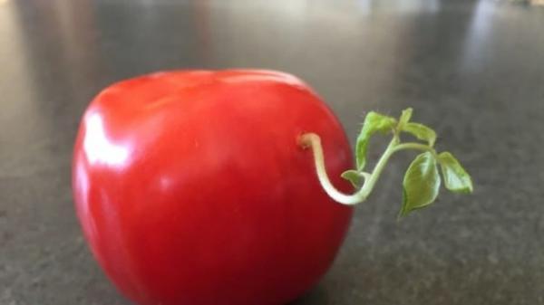 GALERIE – Tohle jídlo si z nás snad dělá srandu