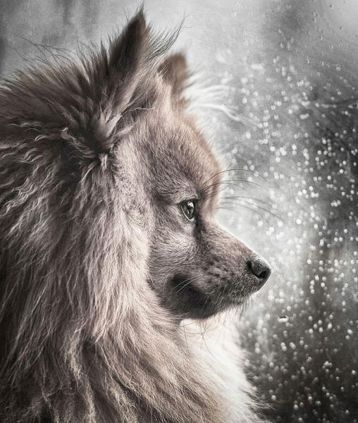 GALERIE - Nejlepší fotky psů 2018
