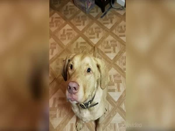 Pes, který miluje strouhaný sýr!