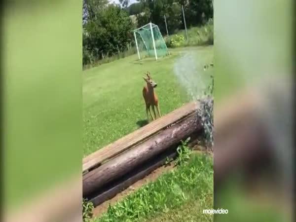 I lesním zvířatům je příliš vedro