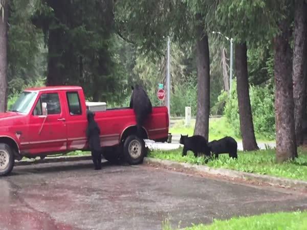 Medvědí výprava (Aljaška)