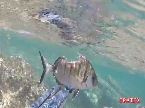 Ryba bez půlky těla