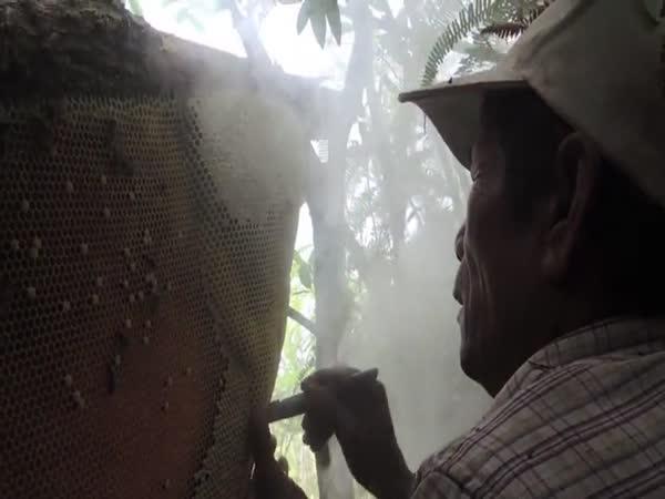 Med přímo ze stromu (Kambodža)
