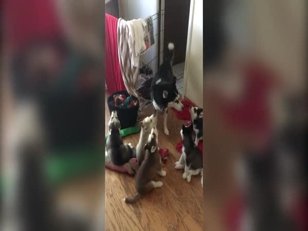 Máma dává lekci štěňatům