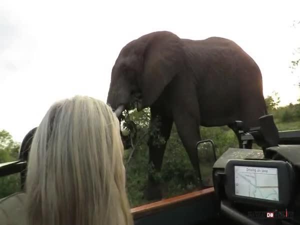 Setkání se slonem