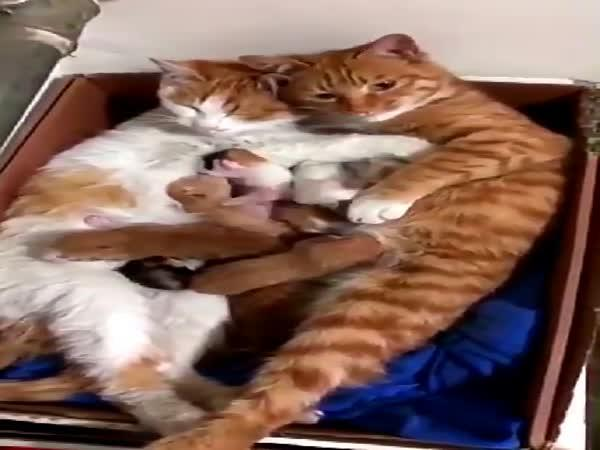Kočičí rodinka dobývá internet