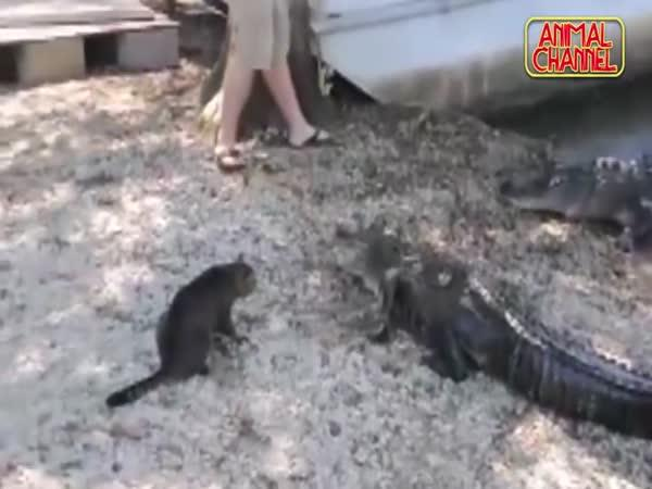 Nejodvážnější kočky