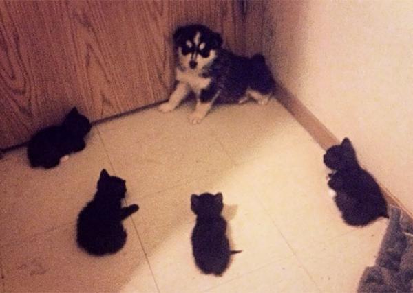 GALERIE - Vztahy koček a psů jsou nejtěžší