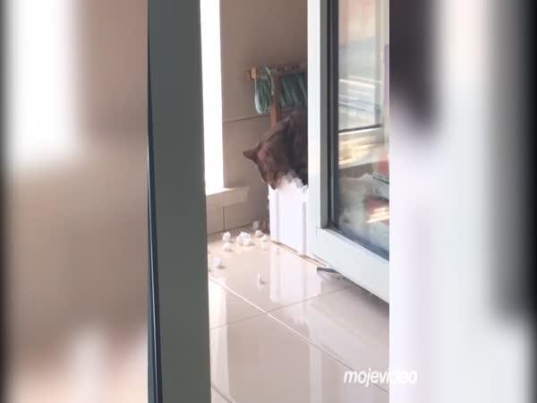 Kočka miluje polystyren