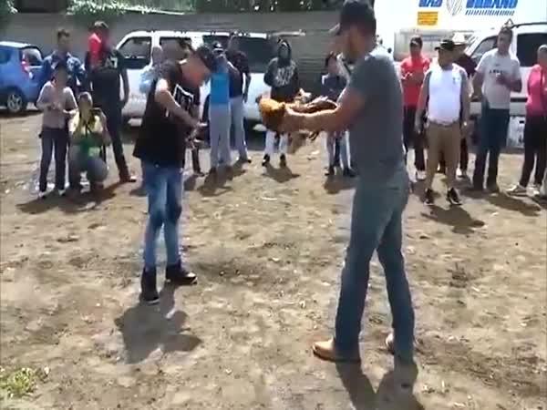 Kohoutí zápas