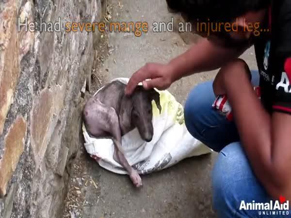 Záchrana psa z plastového pytle