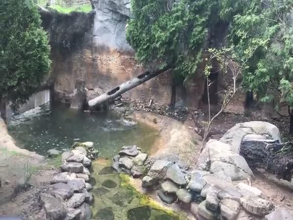 Prostopášné vydry si trénují salto