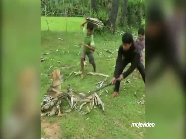 Záchrana psa