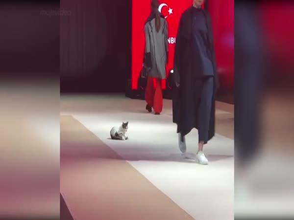 Chlupatá modelka na módní přehlídce