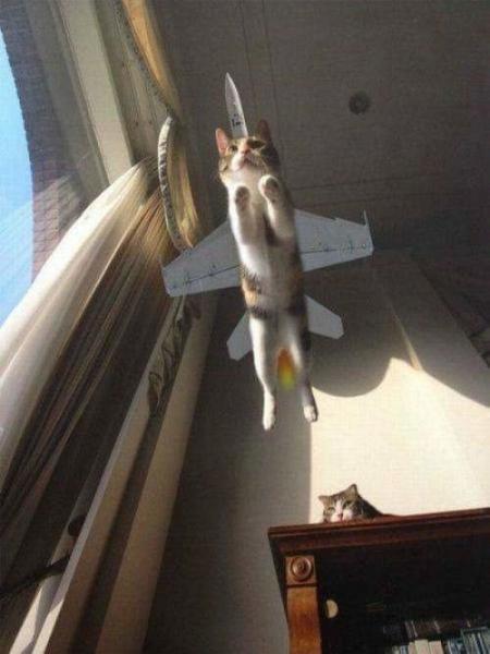 GALERIE - Kočky v akci
