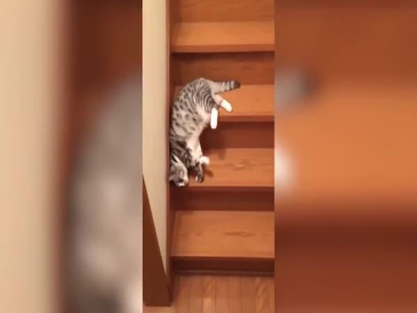 Nejlínější kočka na světě
