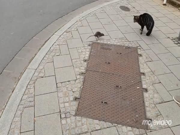 Tom a Jerry v realitě