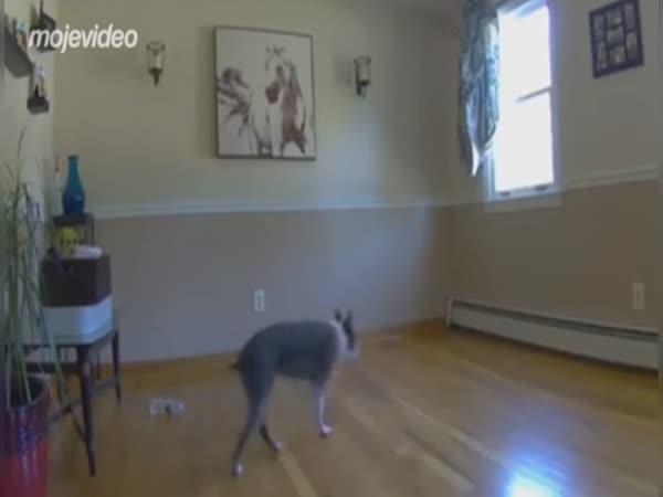 Nestěhuj nábytek, když máš slepého psa