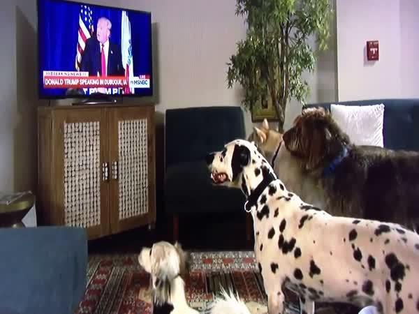 Jak Donald Trump ovládá psy