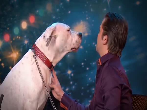 Pes co zpívá, nekouše
