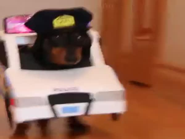 Rychlý a účinný zásah psí policie
