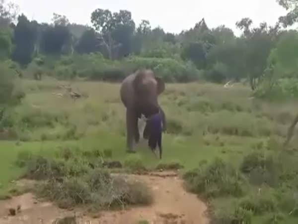 Chtěl blízko ke slonovi