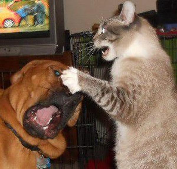 GALERIE - 15 fotek o soužití psů a koček.