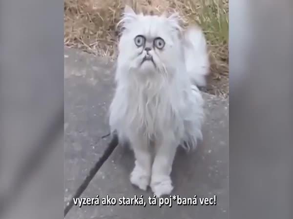 Nejdivnější kočka na světě