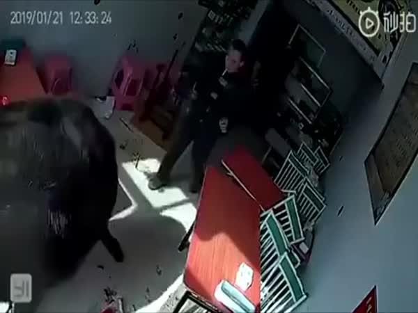 Býk vs. návštěvníci kavárny