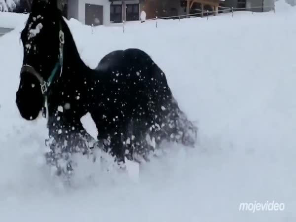 Koňské zimní radovánky