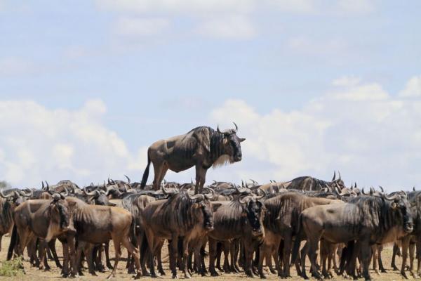 GALERIE - 10 nejvtipnějších fotek divokých zvířat