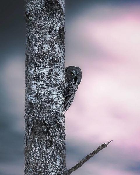 GALERIE - Fotografie finského fotografa