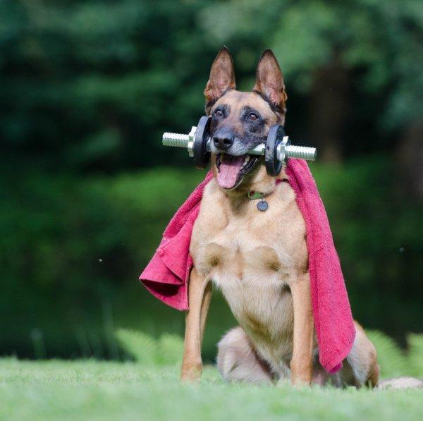 GALERIE - Psi jsou neuvěřitelní komedianti