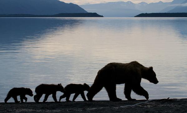 GALERIE - Nejlepší matky jsou medvědice!