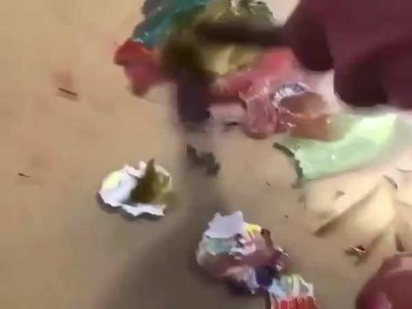 Umělec natočil, jak maluje své obrazy!